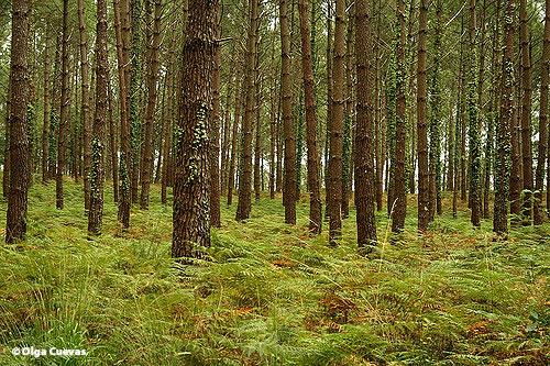 Photo 3 Forêt-des-Landes-Copyright-Olga-Cuevas