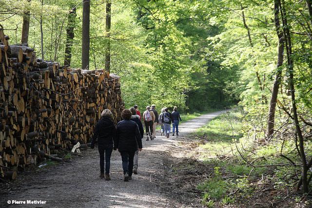 Photo 7 Marche-en-forêt---Vallée-de-chevreuse-copyright-Pierre-Metivier
